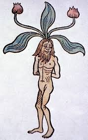 Mandrake root is made of people!